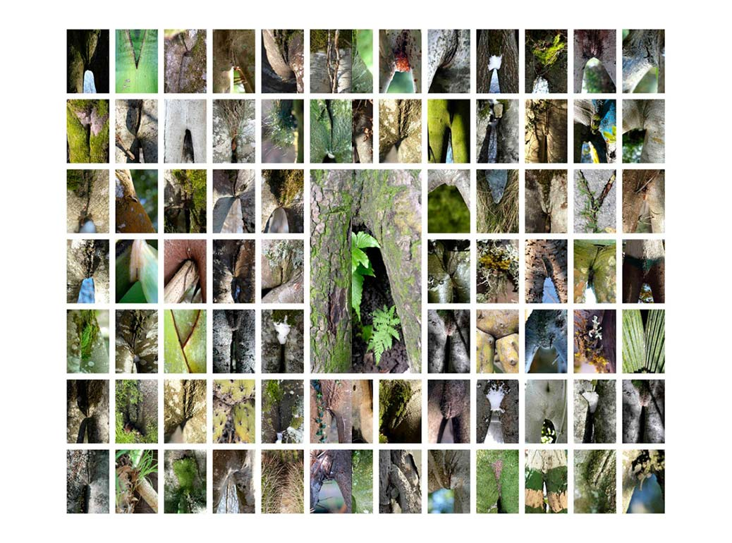 LSDB - Le sexe des branches - Projet photographique de Michel Granger